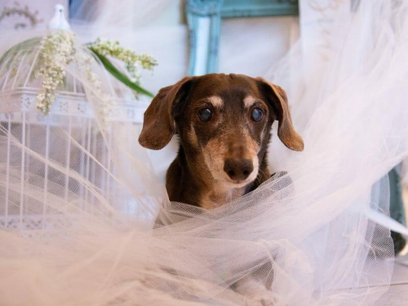 Hochzeit Hund, Hochzeit Tiere, Tiere Trauritual, Redner Hund, Tiere Trauung, Braut Hund, Brautpaar Hund, Wunschredner, Wunschrede, Freier Redner, Dr. Tobias D. Höhn, Trauung Pferd